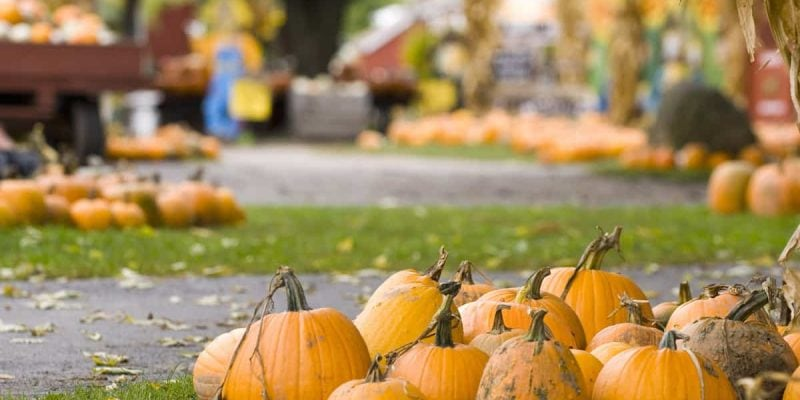 Fall Fun in the Poconos: Attend These Pumpkin Festivals and More | Skytop Lodge