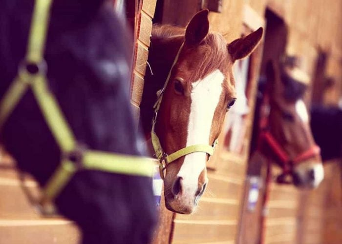 Luxury Resorts in the Poconos | Discover Horseback Riding
